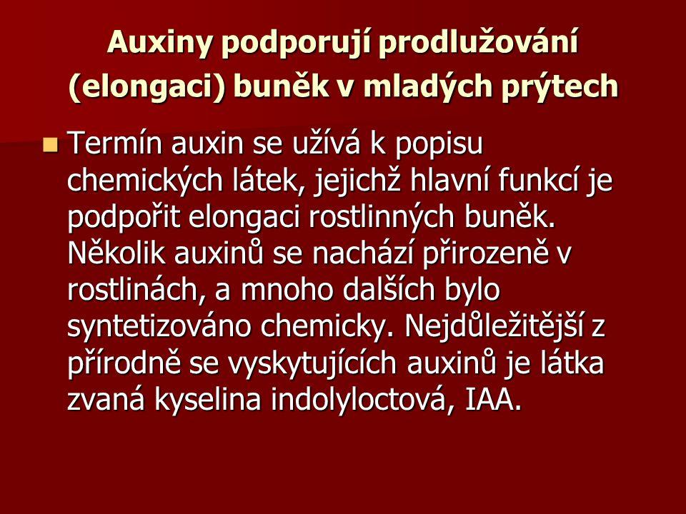 Auxiny podporují prodlužování (elongaci) buněk v mladých prýtech