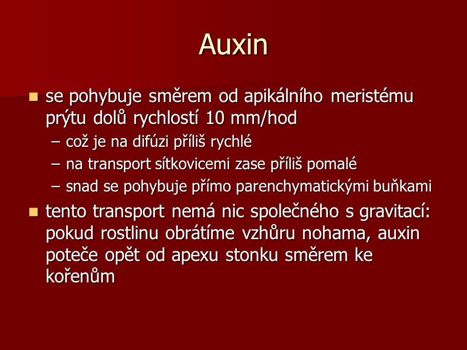 Auxin se pohybuje směrem od apikálního meristému prýtu dolů rychlostí 10 mm/hod. což je na difúzi příliš rychlé.