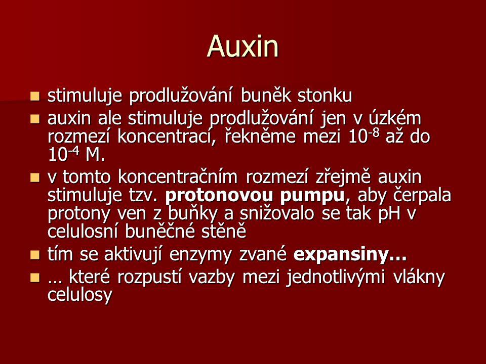 Auxin stimuluje prodlužování buněk stonku