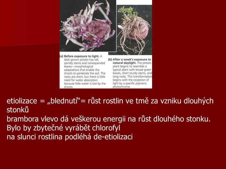 """etiolizace = """"blednutí = růst rostlin ve tmě za vzniku dlouhých stonků"""