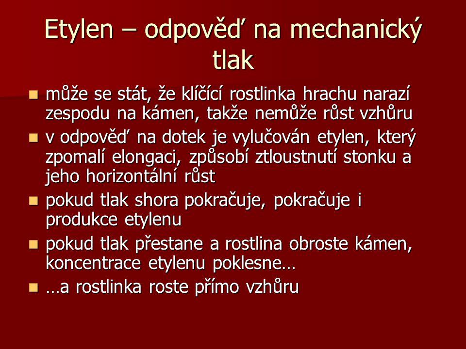Etylen – odpověď na mechanický tlak