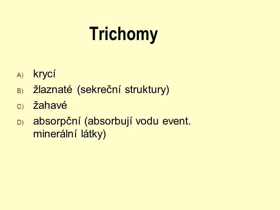 Trichomy krycí žlaznaté (sekreční struktury) žahavé