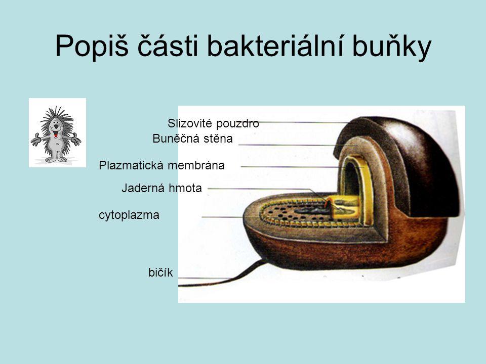 Popiš části bakteriální buňky