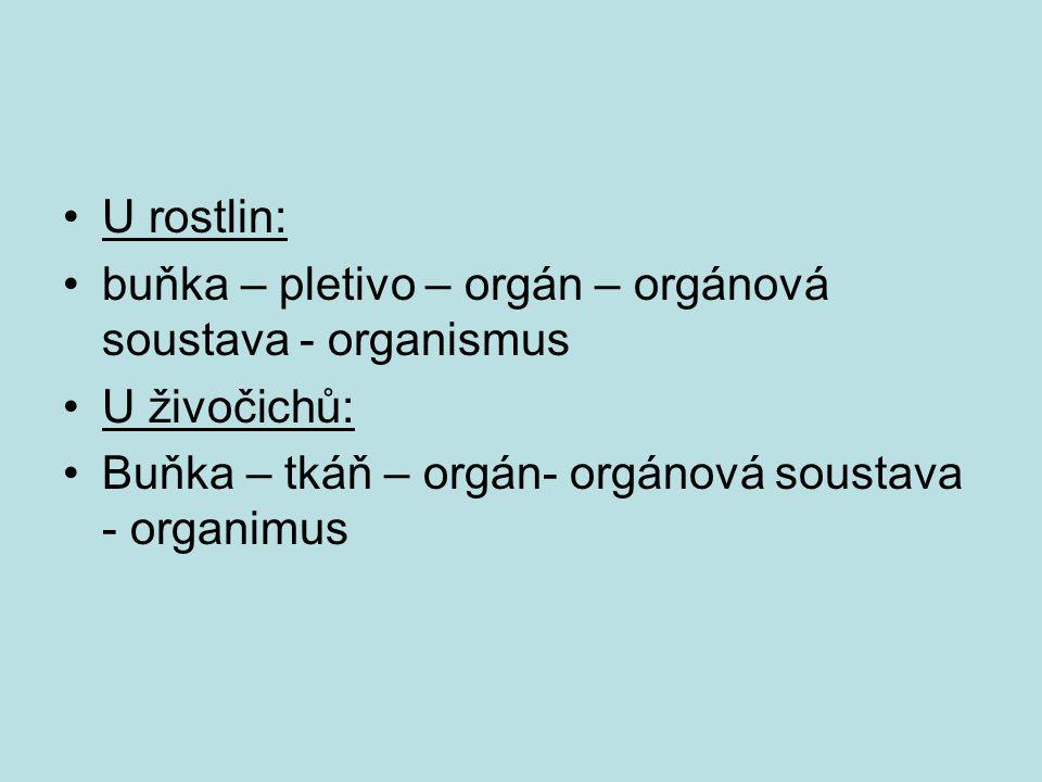 U rostlin: buňka – pletivo – orgán – orgánová soustava - organismus.