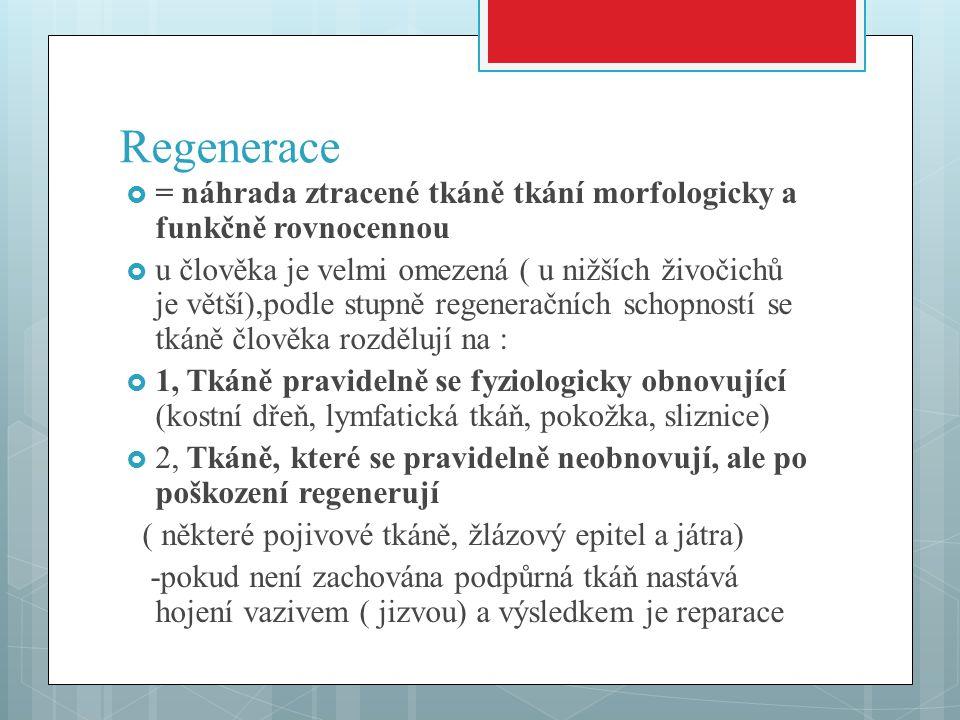 Regenerace = náhrada ztracené tkáně tkání morfologicky a funkčně rovnocennou.