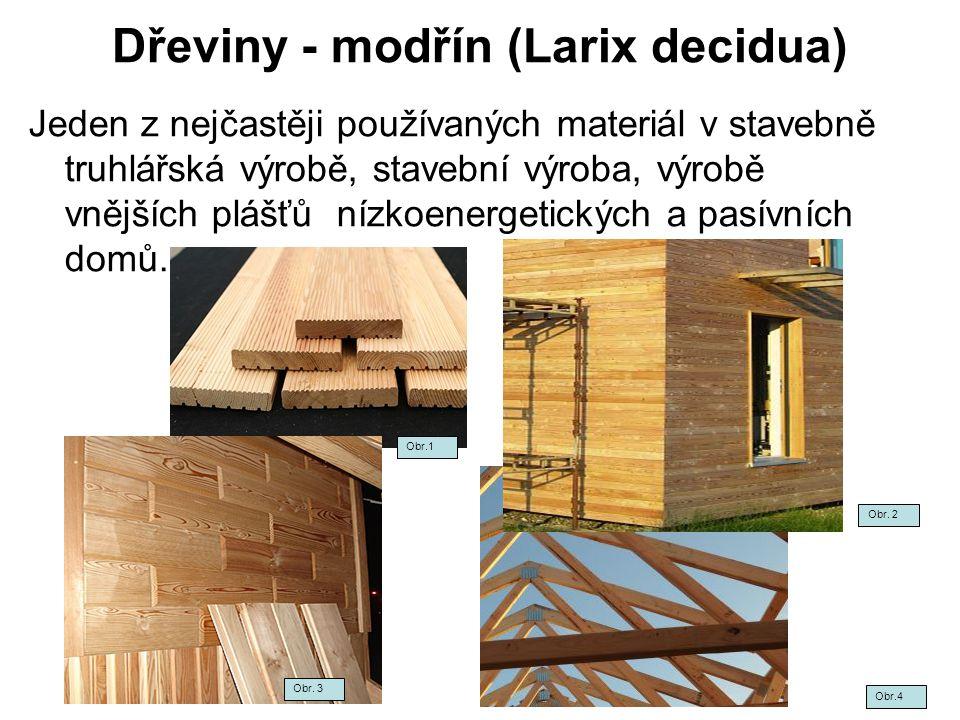 Dřeviny - modřín (Larix decidua)