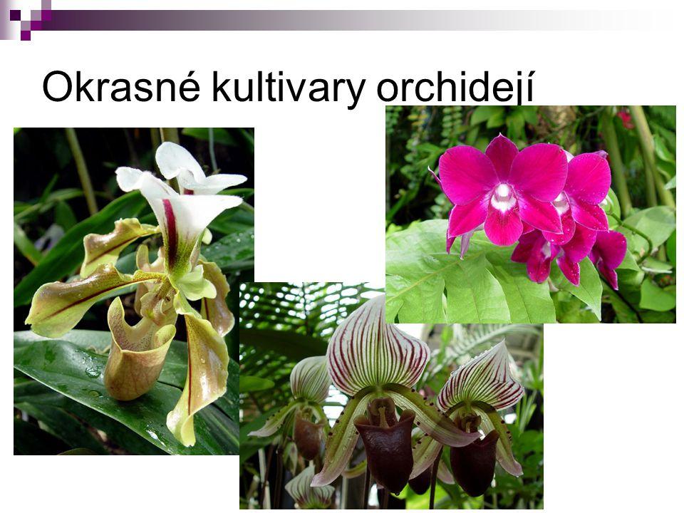 Okrasné kultivary orchidejí