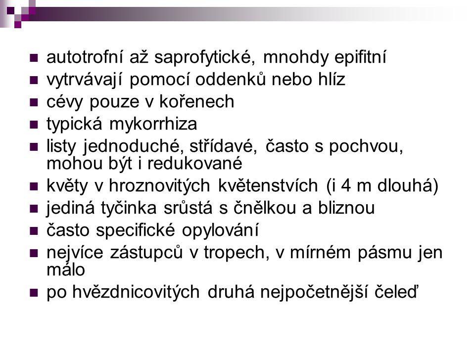autotrofní až saprofytické, mnohdy epifitní