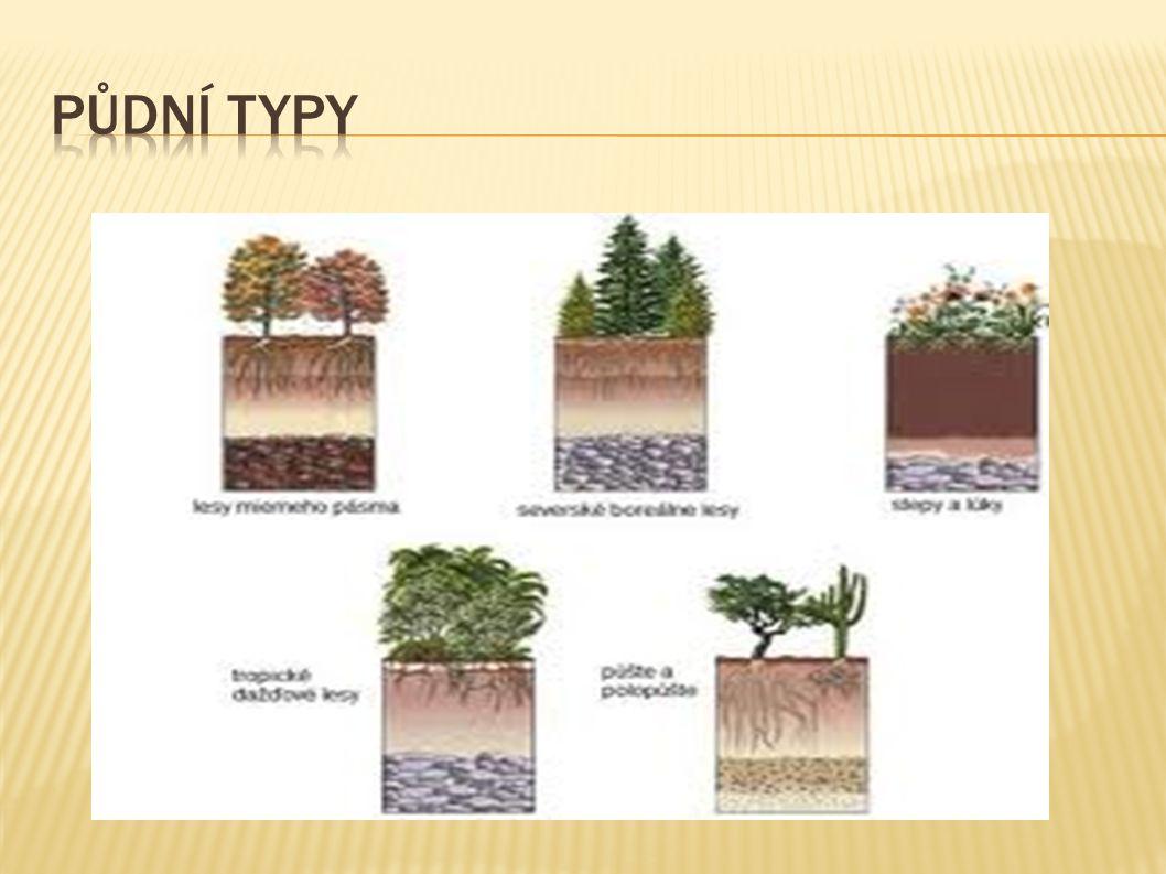 Půdní typy