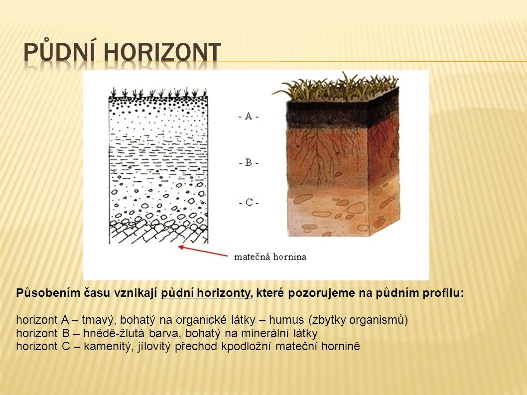 Půdní horizont Působením času vznikají půdní horizonty, které pozorujeme na půdním profilu: