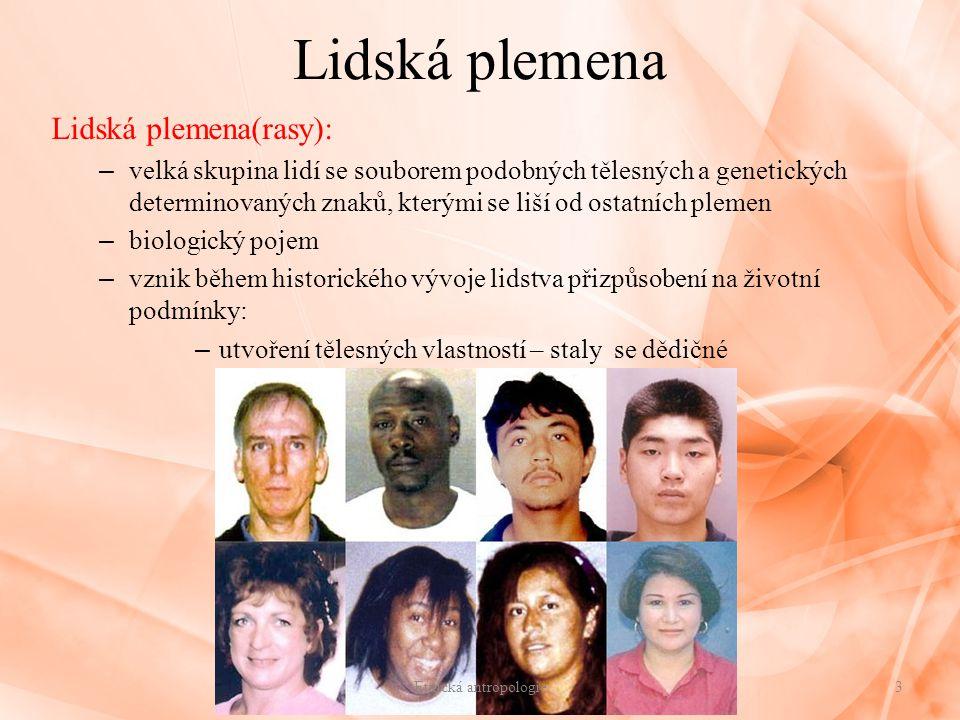 Lidská plemena Lidská plemena(rasy):
