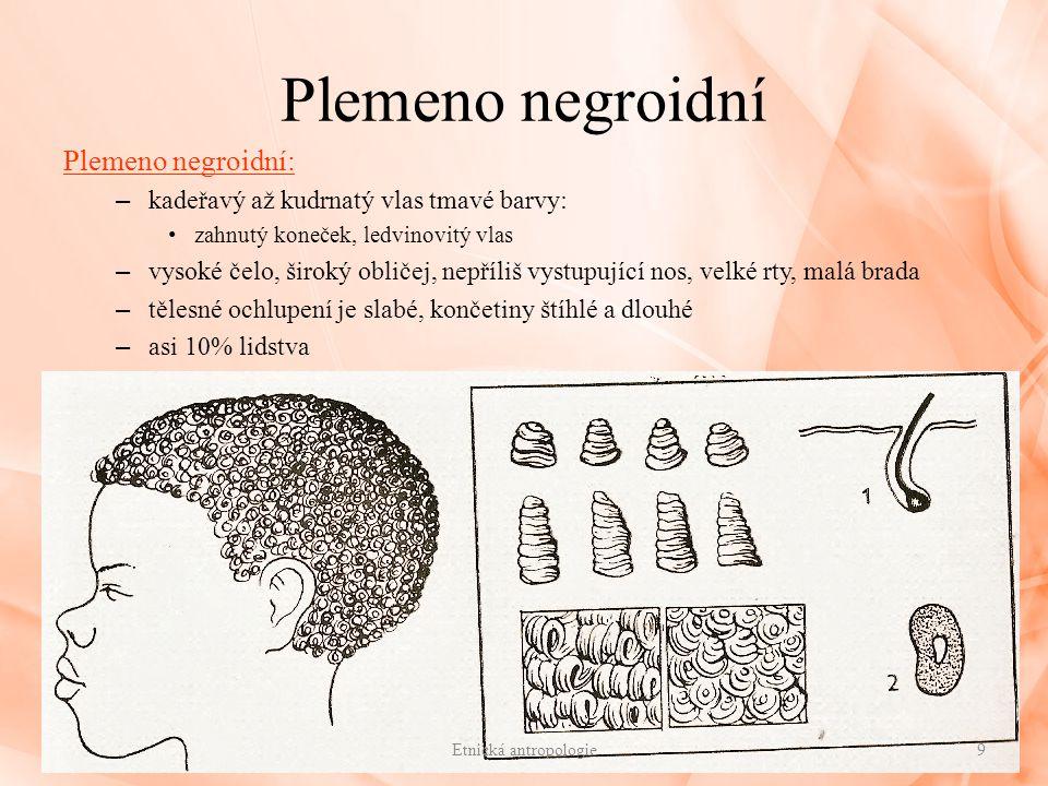 Plemeno negroidní Plemeno negroidní: