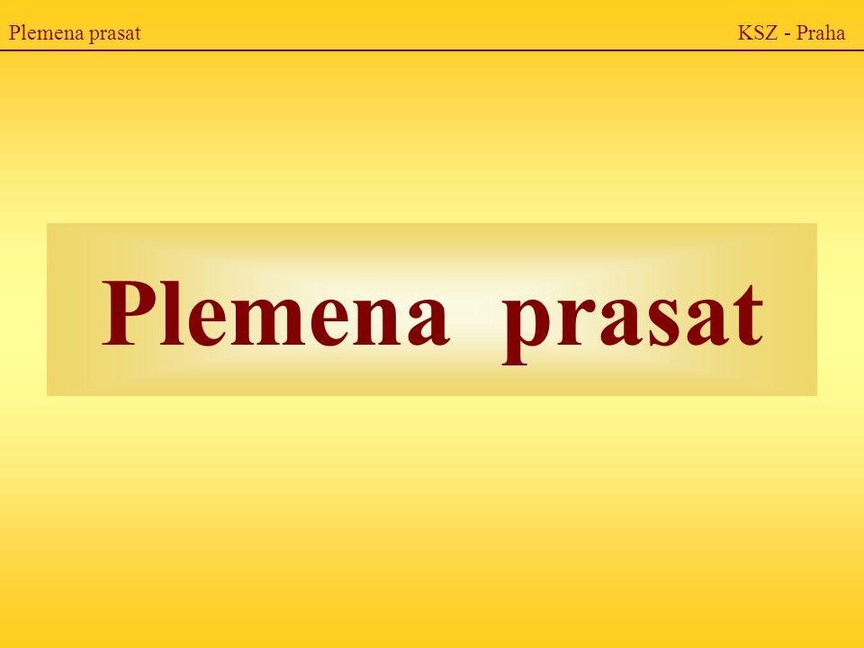 Plemena prasat KSZ - Praha