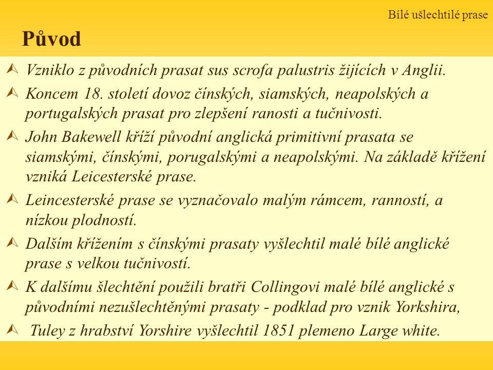 Bílé ušlechtilé prase Původ. Vzniklo z původních prasat sus scrofa palustris žijících v Anglii.