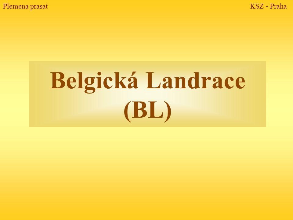 Belgická Landrace (BL)