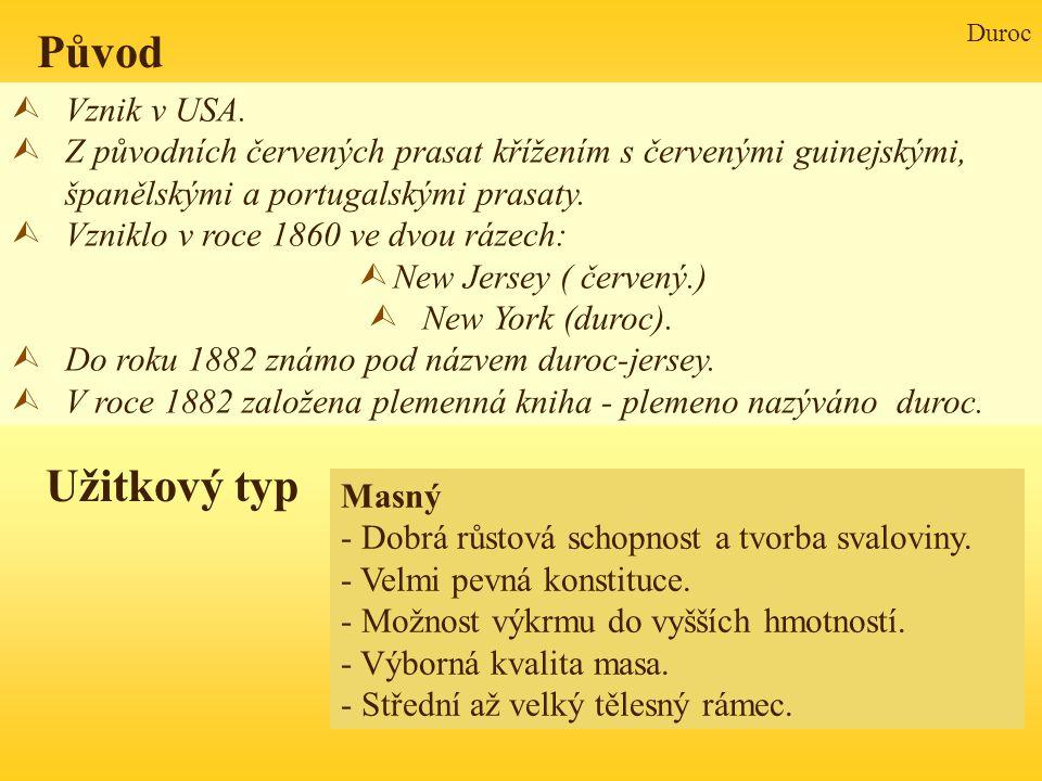 Duroc Původ Užitkový typ Vznik v USA.