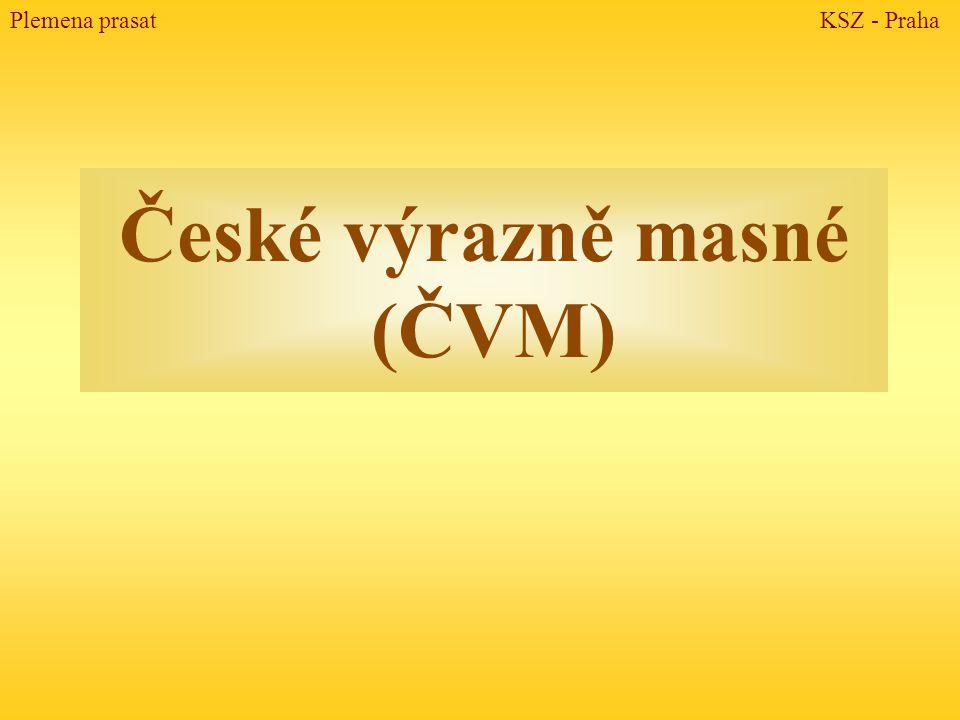 České výrazně masné (ČVM)