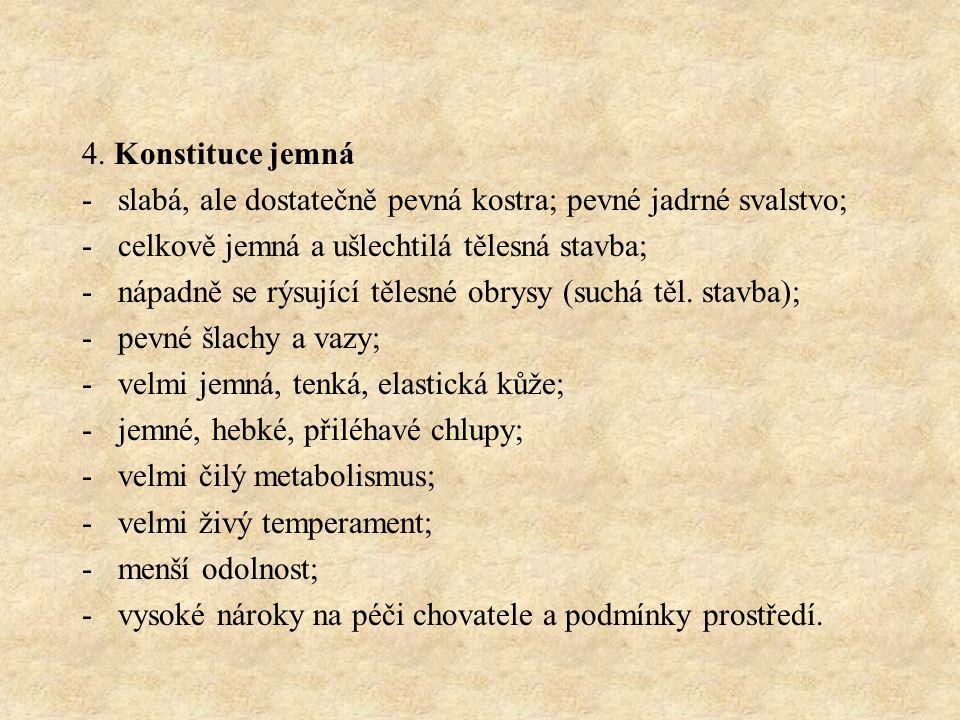 4. Konstituce jemná slabá, ale dostatečně pevná kostra; pevné jadrné svalstvo; celkově jemná a ušlechtilá tělesná stavba;