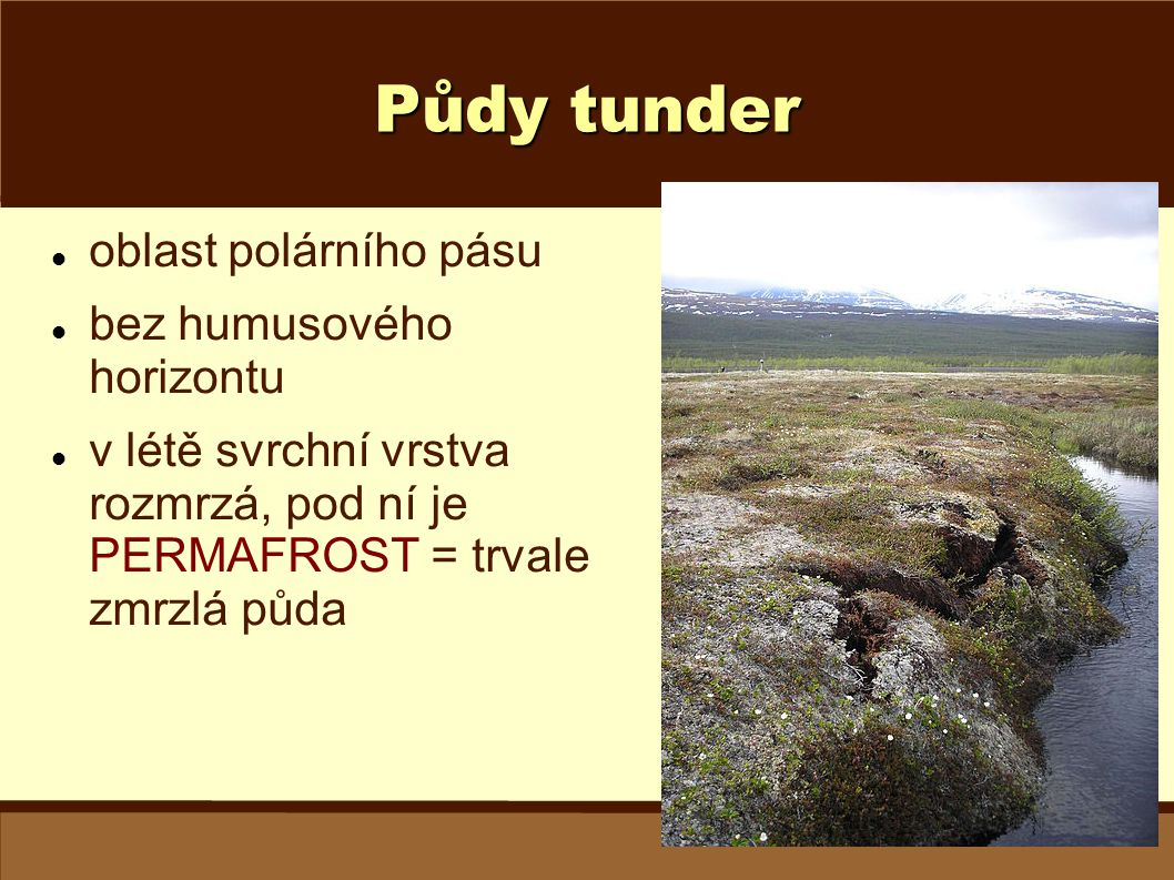 Půdy tunder oblast polárního pásu bez humusového horizontu