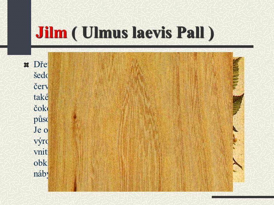 Jilm ( Ulmus laevis Pall )