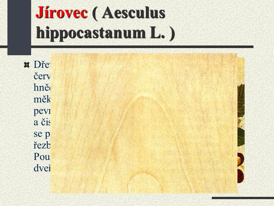 Jírovec ( Aesculus hippocastanum L. )