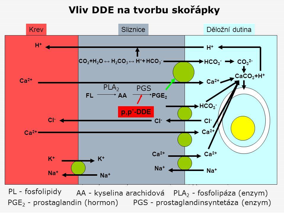 Vliv DDE na tvorbu skořápky