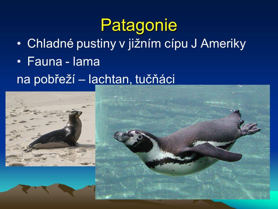 Patagonie Chladné pustiny v jižním cípu J Ameriky Fauna - lama