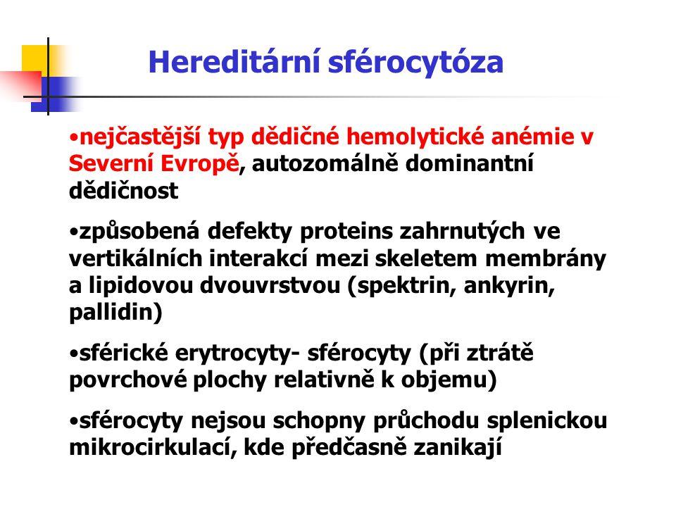 Hereditární sférocytóza