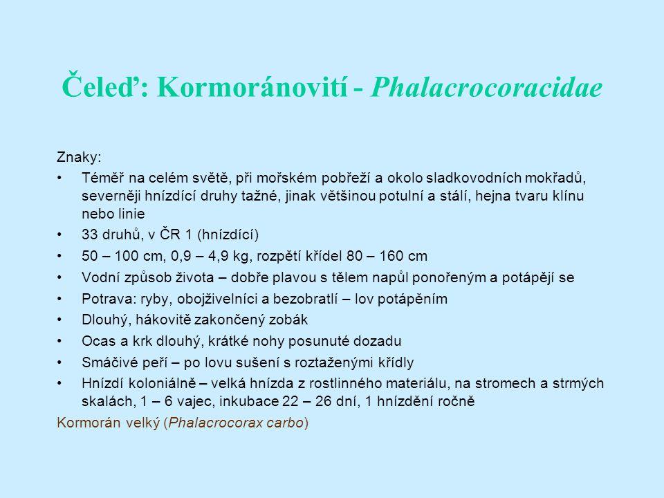 Čeleď: Kormoránovití - Phalacrocoracidae