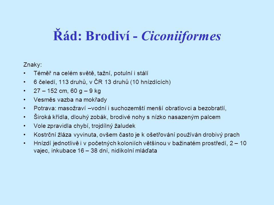 Řád: Brodiví - Ciconiiformes