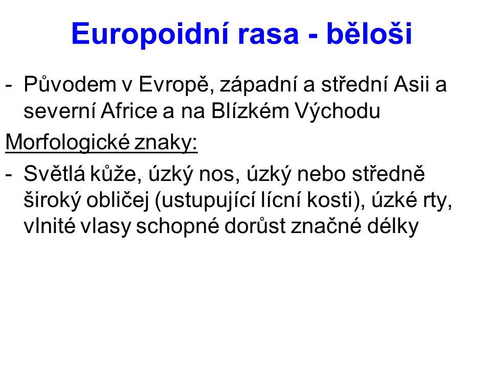 Europoidní rasa - běloši