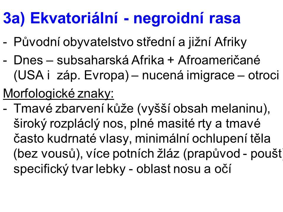 3a) Ekvatoriální - negroidní rasa