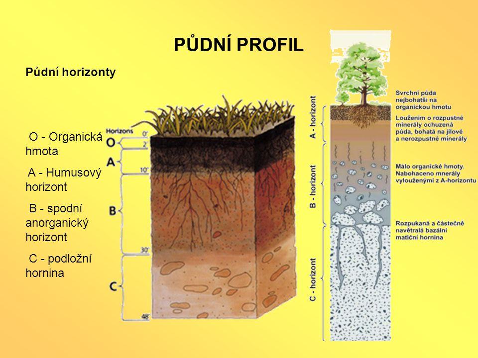 PŮDNÍ PROFIL Půdní horizonty O - Organická hmota A - Humusový horizont