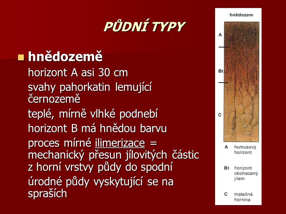 PŮDNÍ TYPY hnědozemě horizont A asi 30 cm