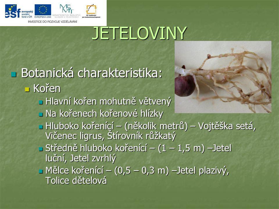 JETELOVINY Botanická charakteristika: Kořen