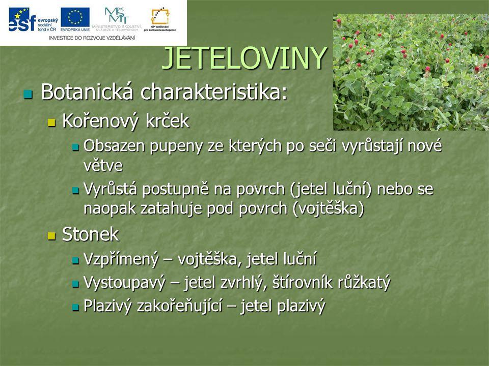 JETELOVINY Botanická charakteristika: Kořenový krček Stonek
