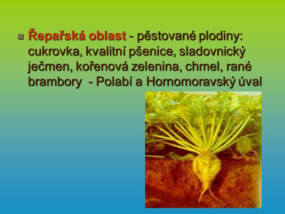 Řepařská oblast - pěstované plodiny: cukrovka, kvalitní pšenice, sladovnický ječmen, kořenová zelenina, chmel, rané brambory - Polabí a Hornomoravský úval