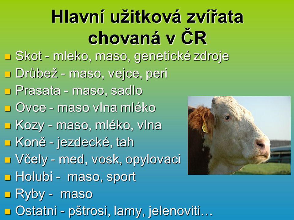 Hlavní užitková zvířata chovaná v ČR