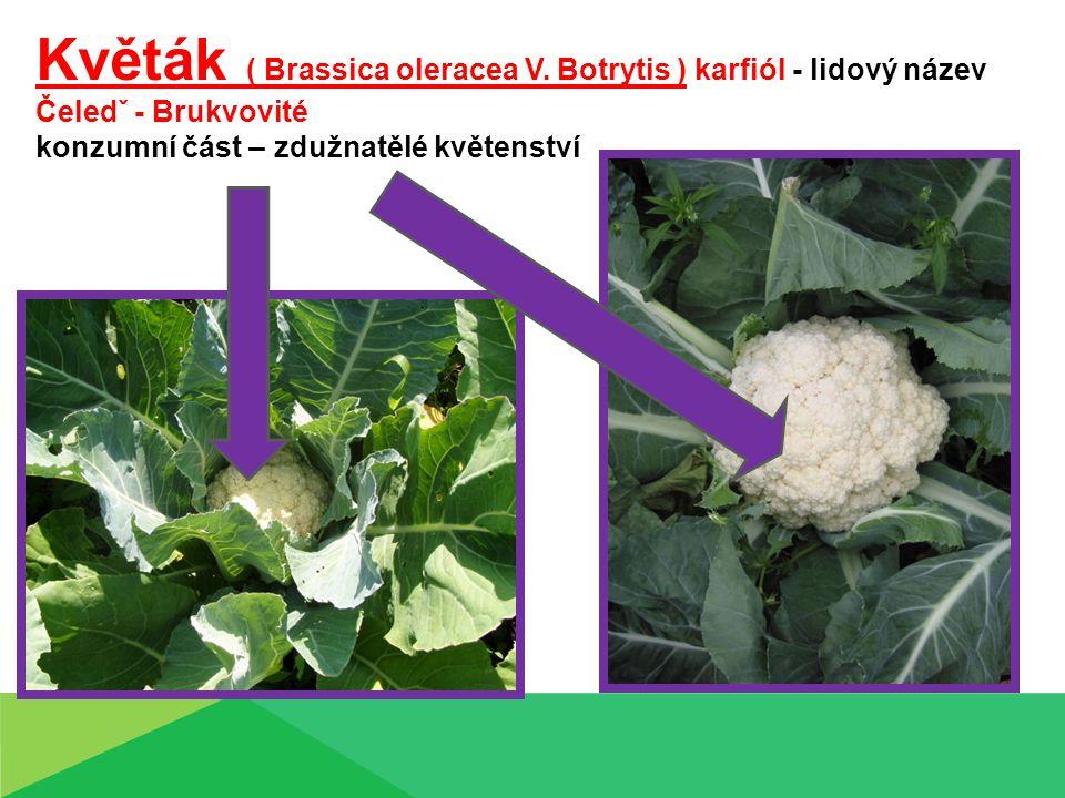 Květák ( Brassica oleracea V. Botrytis ) karfiól - lidový název