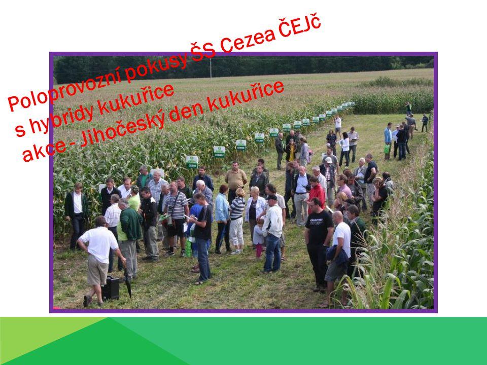 Poloprovozní pokusy ŠS Cezea ČEJč s hybridy kukuřice