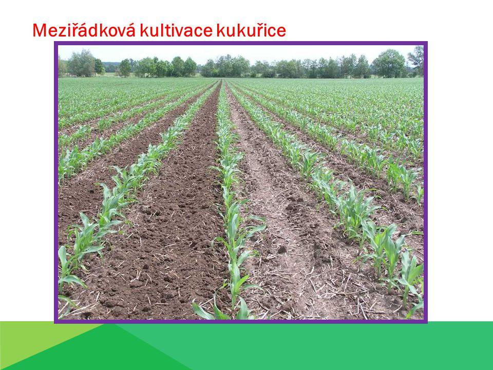 Meziřádková kultivace kukuřice