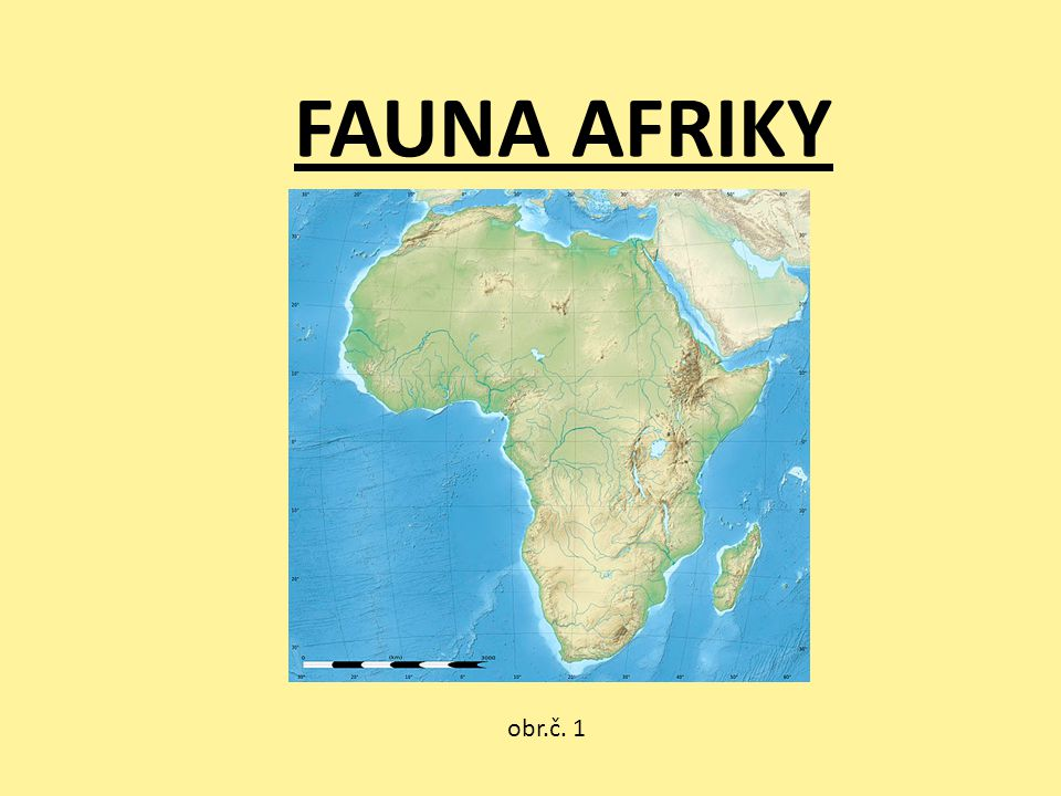 FAUNA AFRIKY obr.č. 1