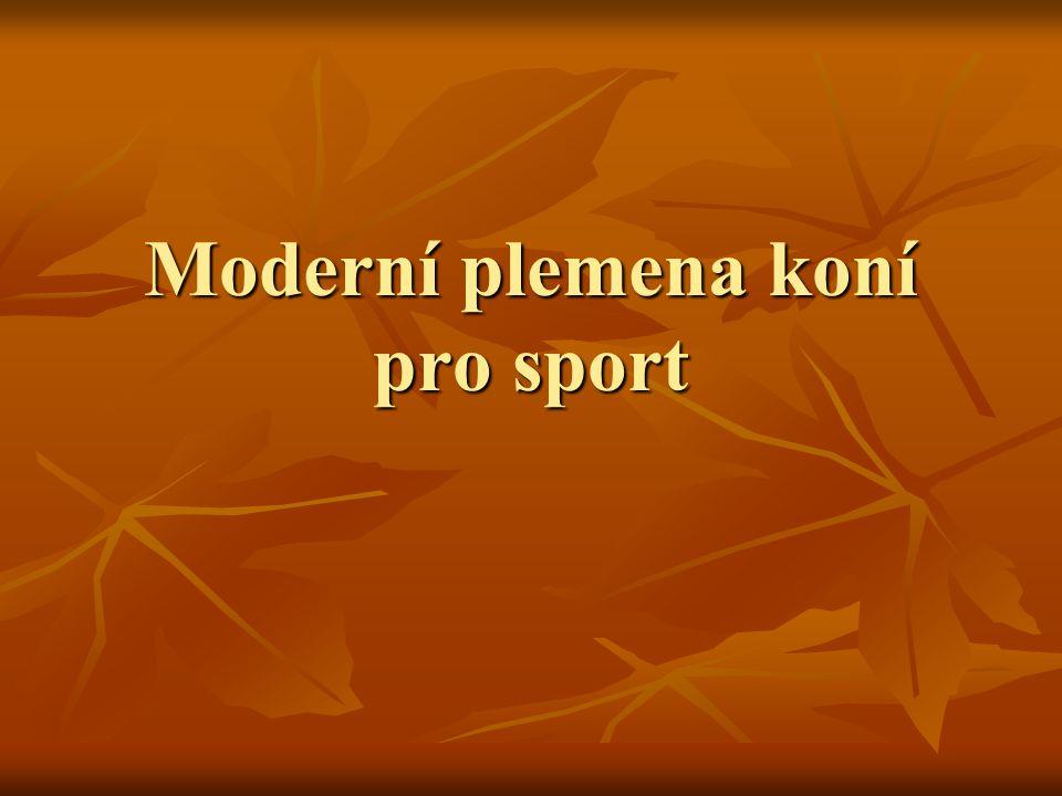 Moderní plemena koní pro sport