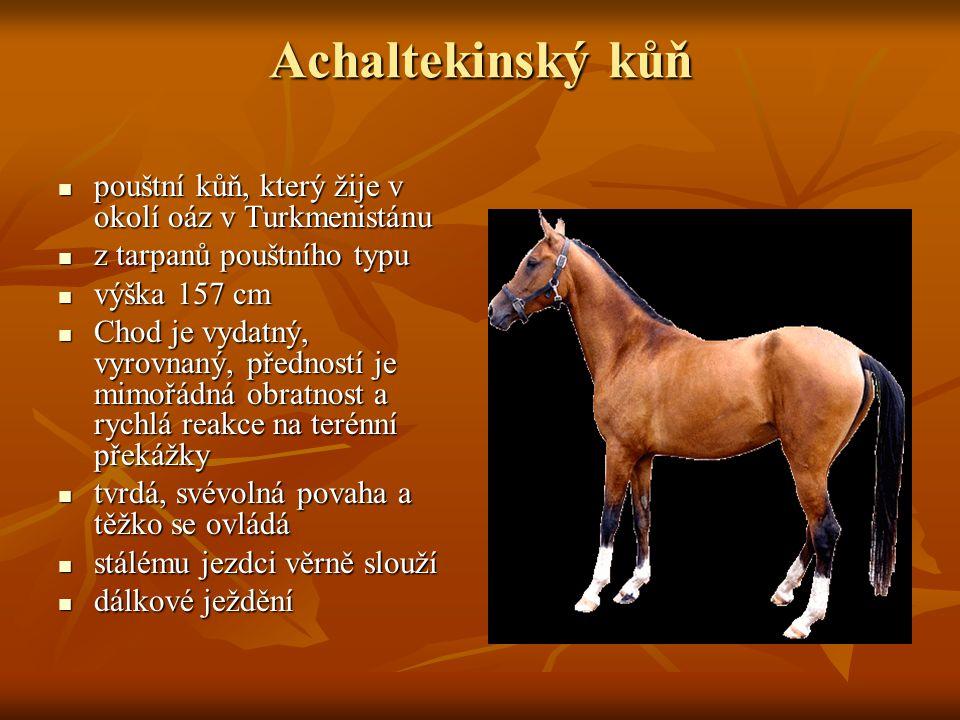 Achaltekinský kůň pouštní kůň, který žije v okolí oáz v Turkmenistánu