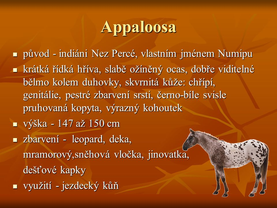 Appaloosa původ - indiáni Nez Percé, vlastním jménem Numipu