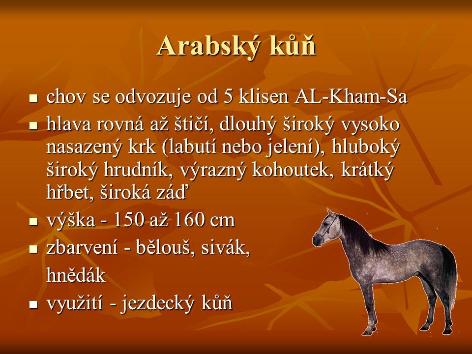 Arabský kůň chov se odvozuje od 5 klisen AL-Kham-Sa