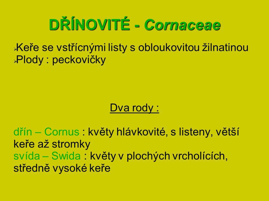 DŘÍNOVITÉ - Cornaceae Keře se vstřícnými listy s obloukovitou žilnatinou. Plody : peckovičky. Dva rody :