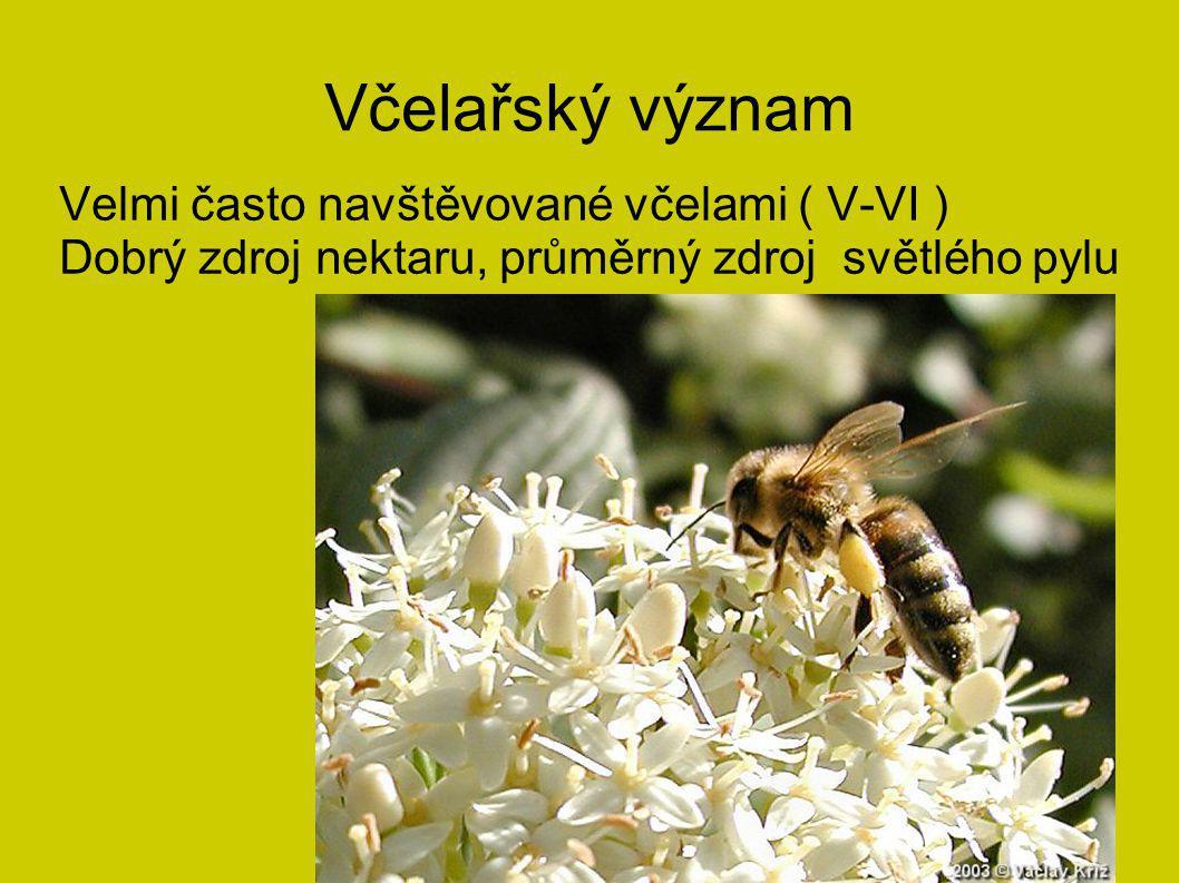 Včelařský význam Velmi často navštěvované včelami ( V-VI )
