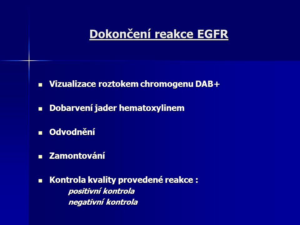 Dokončení reakce EGFR Vizualizace roztokem chromogenu DAB+