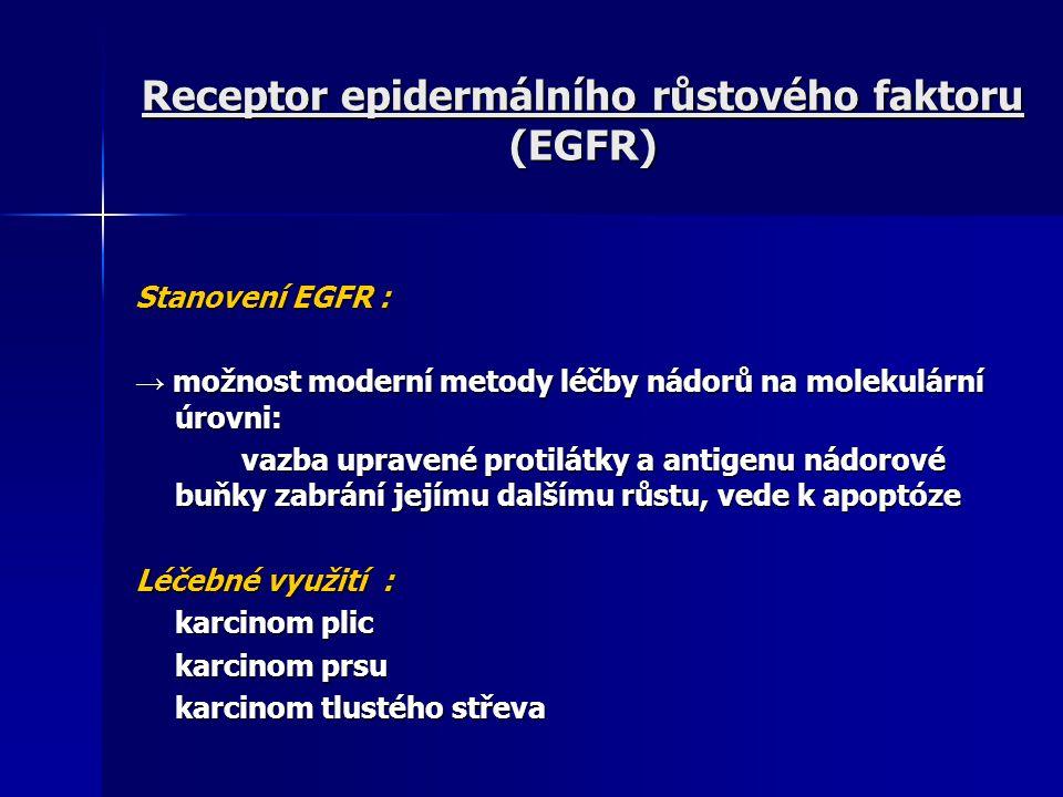 Receptor epidermálního růstového faktoru (EGFR)